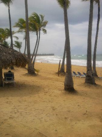 Excellence Punta Cana: Paradise!