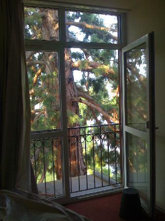 Les Hortensias: Séquoia juste devant la fenêtre