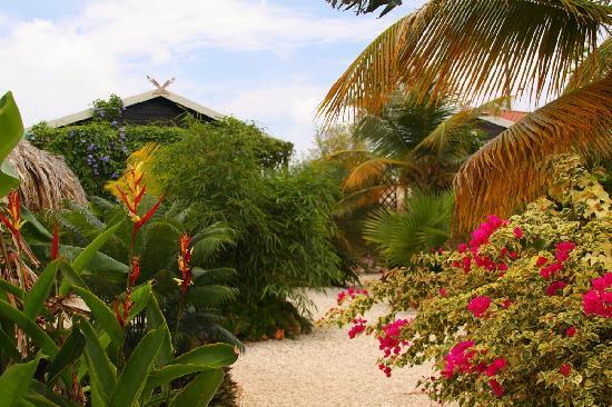 Bamboo Bali Bonaire Resort: Comforting view