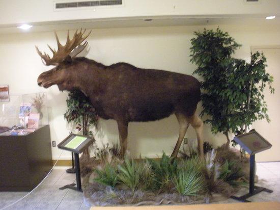 New Brunswick Museum: inside museum