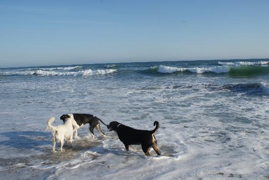 Image result for dog beach california