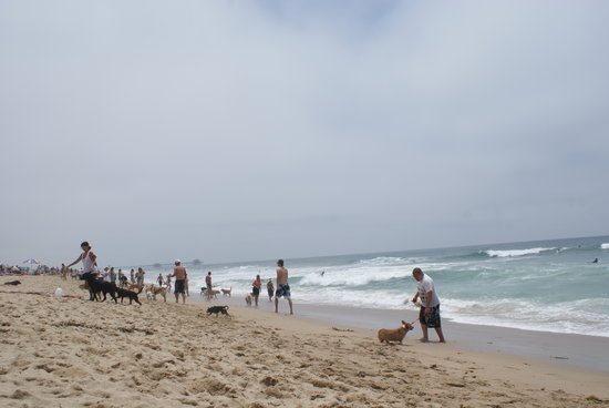 Huntington Dog Beach