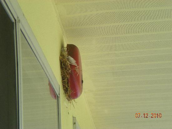 Motel 6 Philadelphia,PA-Brooklawn : birds nests on all fire alarm bells
