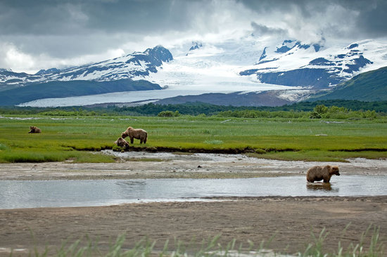 Alaska Wild Bear Adventures
