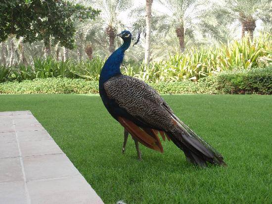 Residence & Spa at One&Only Royal Mirage Dubai: Proud as a Peacock