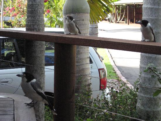 Boat Harbour Resort : Daily vistors to our Villa verandah