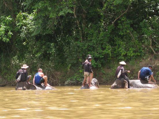 Elephant Lodge: Bathing Elephants in Nam Khan River