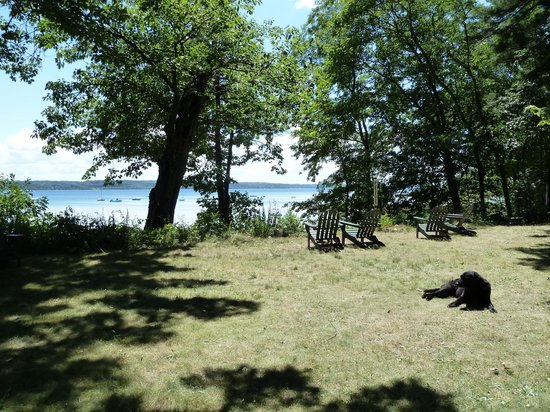 Neahtawanta Inn: View from the lawn of the bay + resident senior dog