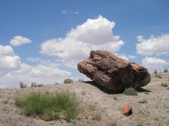 Estados Unidos: In der Wüste von Arizona - Petrified Forest