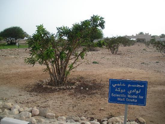 Museum Salalah : vor dem Museum
