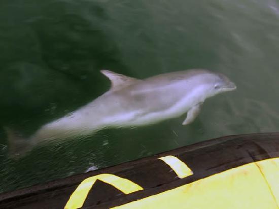 Sea Safari Tours : Porpoise