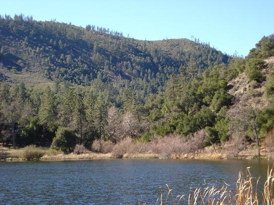 Zaca Lake Retreat : Beautiful morning view