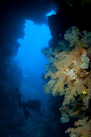 Ono Island, Fidschi: Astrolabe Reef