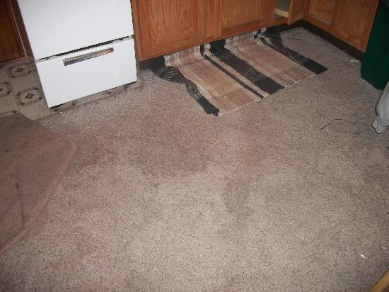 Buck-N-Bass Resort: Stained carpet in kitchen