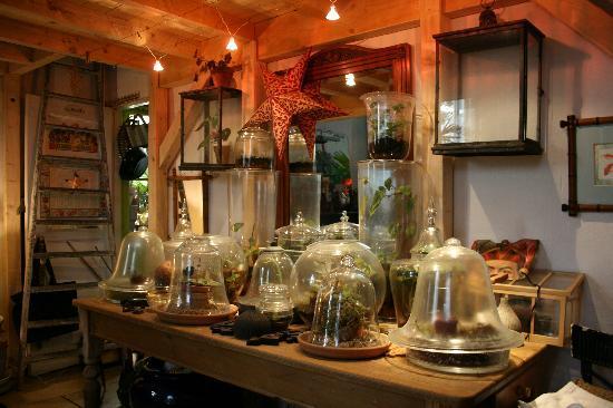 Chambre d'Autres et Suite du Merle Blanc: le jardin tropical maison