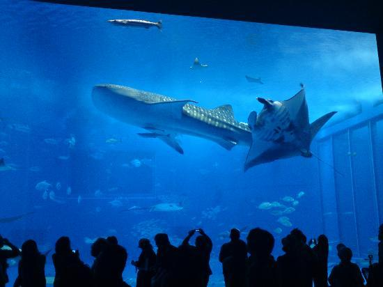 Tokyo, Japan: whale shark , manta rays , is a must visit spot  !! april 2010