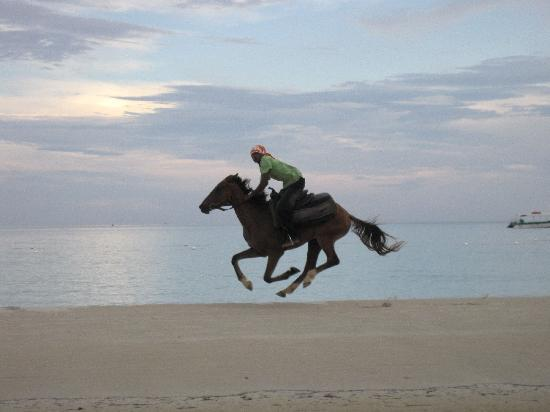 Couples Swept Away: Horses riding by on the beach
