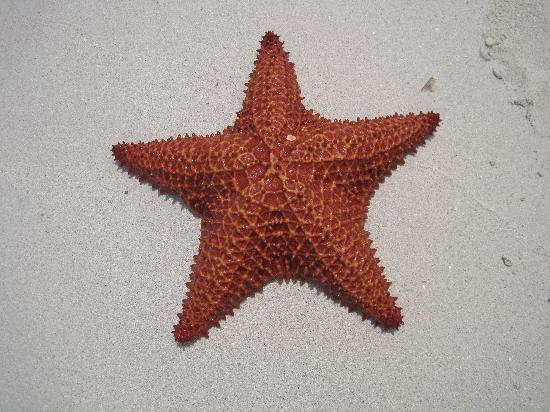 Couples Swept Away: Starfish