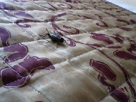 Fairfield Inn & Suites San Antonio Downtown/Market Square: The cricket on the bed