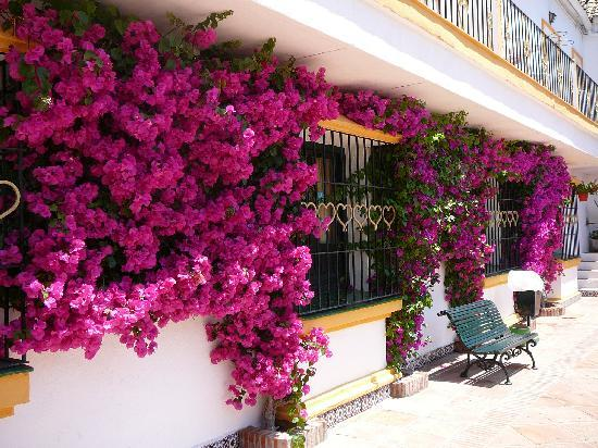 Globales Pueblo Andaluz : Beautiful courtyard