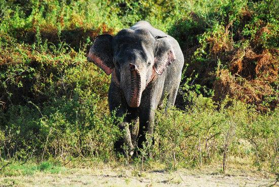 Yala National Park, Sri Lanka: Yala - July 2010