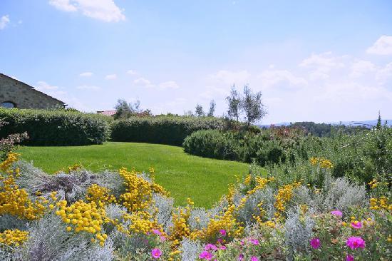 Podere il Pino: Flowers and Colors - Fiori e Colori