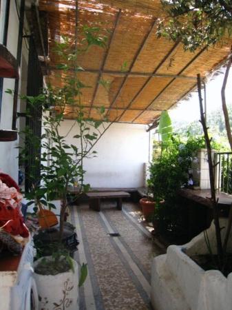 Rambutan: Inside terrace 2