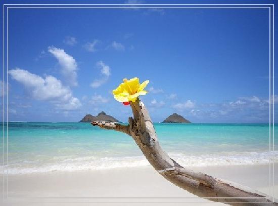 Lanikai Beach: ラニカイビーチ1