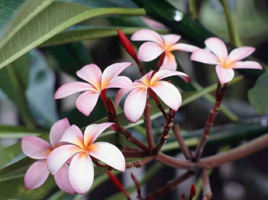 Sandaig Guest House: flowers