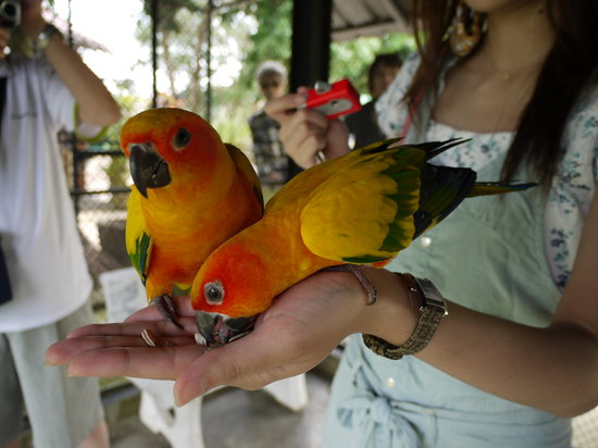 Paradise Park Farm : Play with parrots