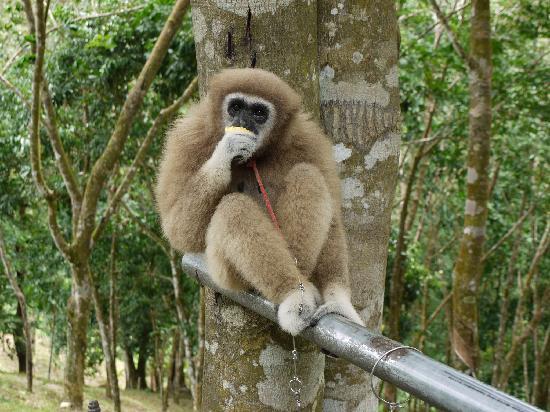 Paradise Park Farm : Monkey