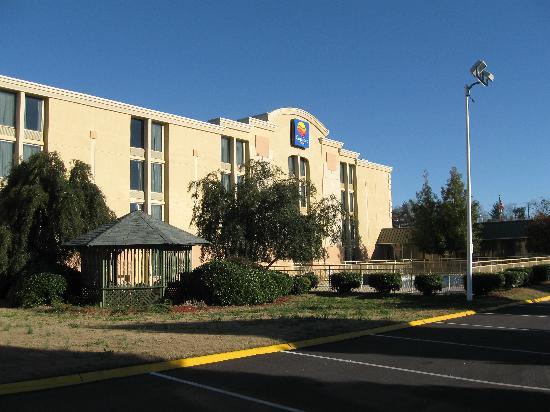 Comfort Inn Millennium: Gazebo by pool
