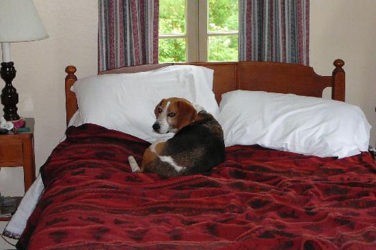 Hulls Cove, ME: Charlie enjoyed the comfy beds