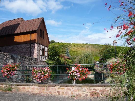 Riquewihr, France : 周囲は葡萄