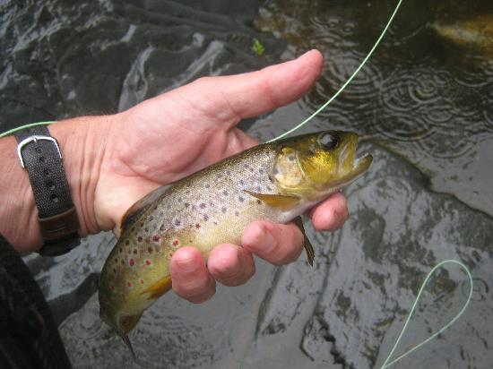 Forest Houses Resort: Little brown back in the creek