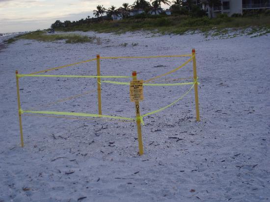 Loggerhead Cay: Sea Turtle Nest
