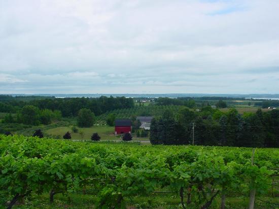 Korner Kottage Bed & Breakfast: Chateau Chantal Vineyard view