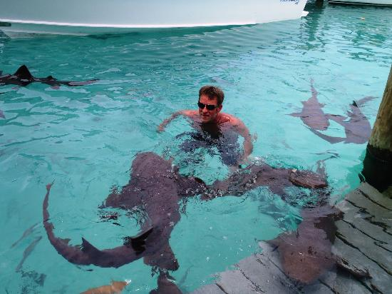 Swmiing With Nurse Sharks Picture Of Great Exuma Out