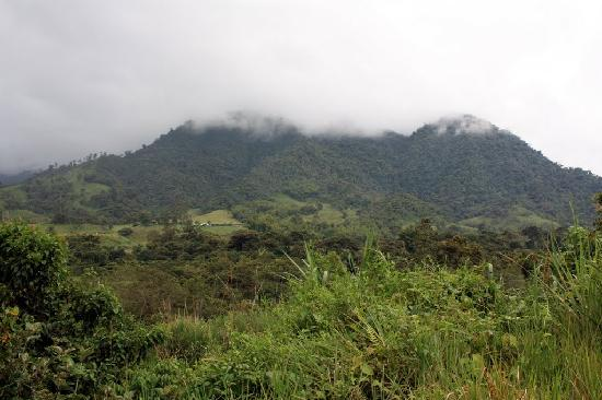 Casa Divina Lodge: View of the cloud forest