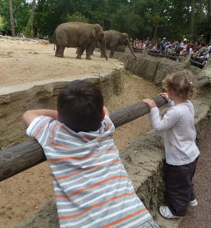 Siblu Villages - Les Charmettes: mes enfants au zoo de la palmyre