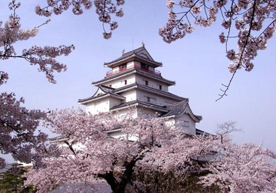 NHK大河ドラマで注目された会津若松の鶴ヶ城は、福島でも有数の桜の名所です。関東で桜が散った後の4月中旬からが見頃となる会津若松の桜は、ゴールデンウィークまで楽しめます。ここでは、会津若松の桜の名所としての鶴ヶ城を紹介します。のサムネイル画像