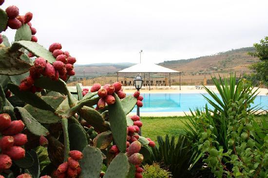 Agriturismo Gigliotto: Pool area
