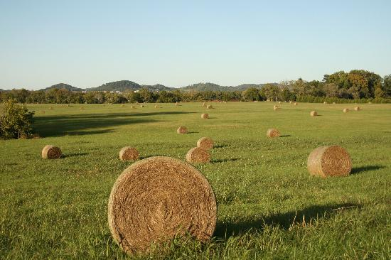 Scenic Countryside of Franklin in Williamson County, TN