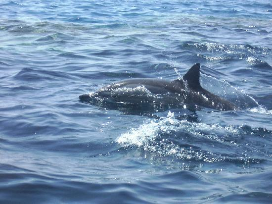 Abo Nawas Resort: dolphins at play