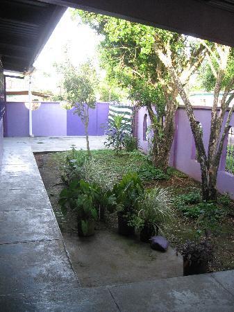 The Purple House International Backpackers Hostel: Courtyard