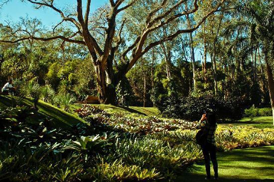 Inhotim : gardens