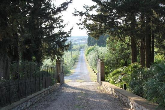 Villa Marcellini: The entrance
