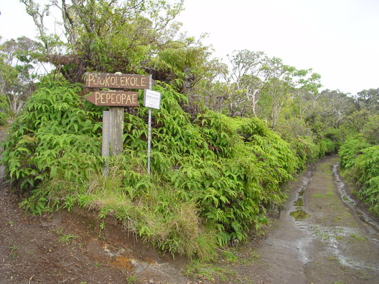 Molokai, HI: Entrance to Pepe'opae Bog Trail