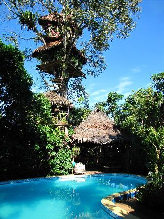 La Casa Fitzcarraldo: Pool and Tree House