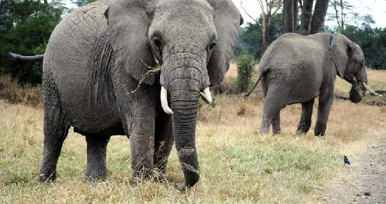 Porini Mara Camp: elephants up close & personal